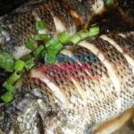 Hamilelikte yenen balık çocuğun astım olma riskini azaltıyor